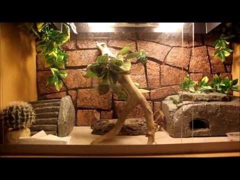 leopard gecko habitat - Google Search | Gecko homes and
