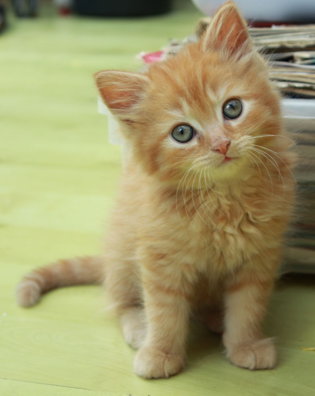 Cute Kittens For Sale London South East London Pets4homes Gatos Trucos