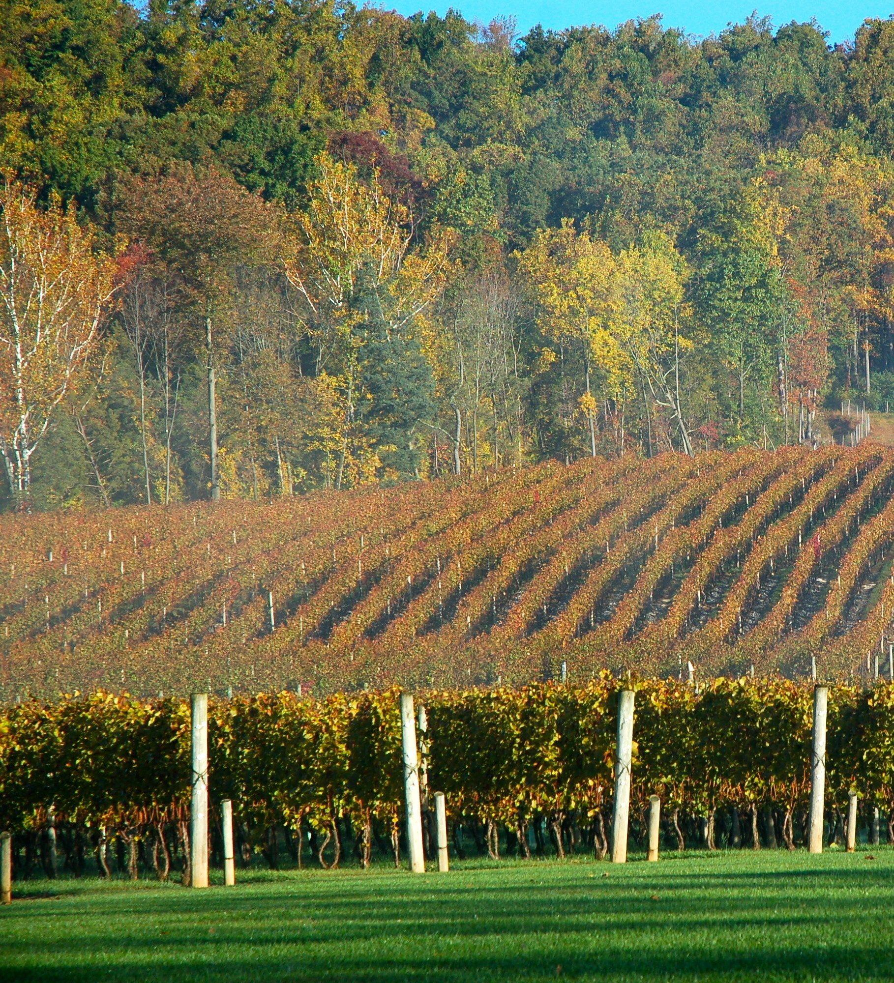 Alba vineyard food truck and wine festival is oct 2425
