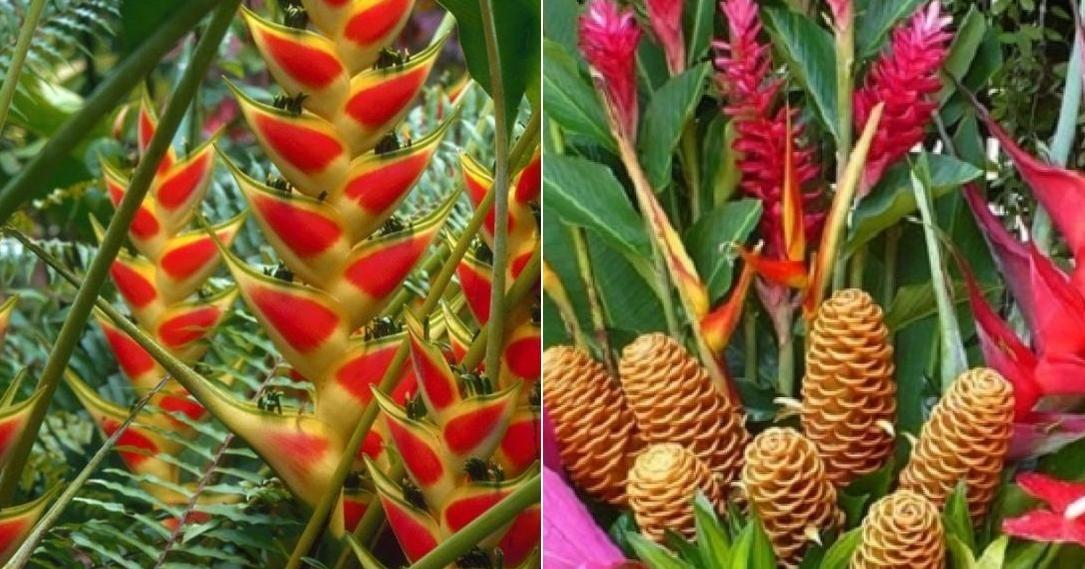 La preferida en jardines tropicales o flor cortada for Vivero plantas exoticas