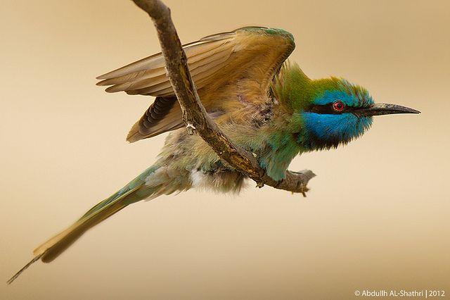 طائر القارور وقت الإقلاع Colorful Birds Nature Tour Bird