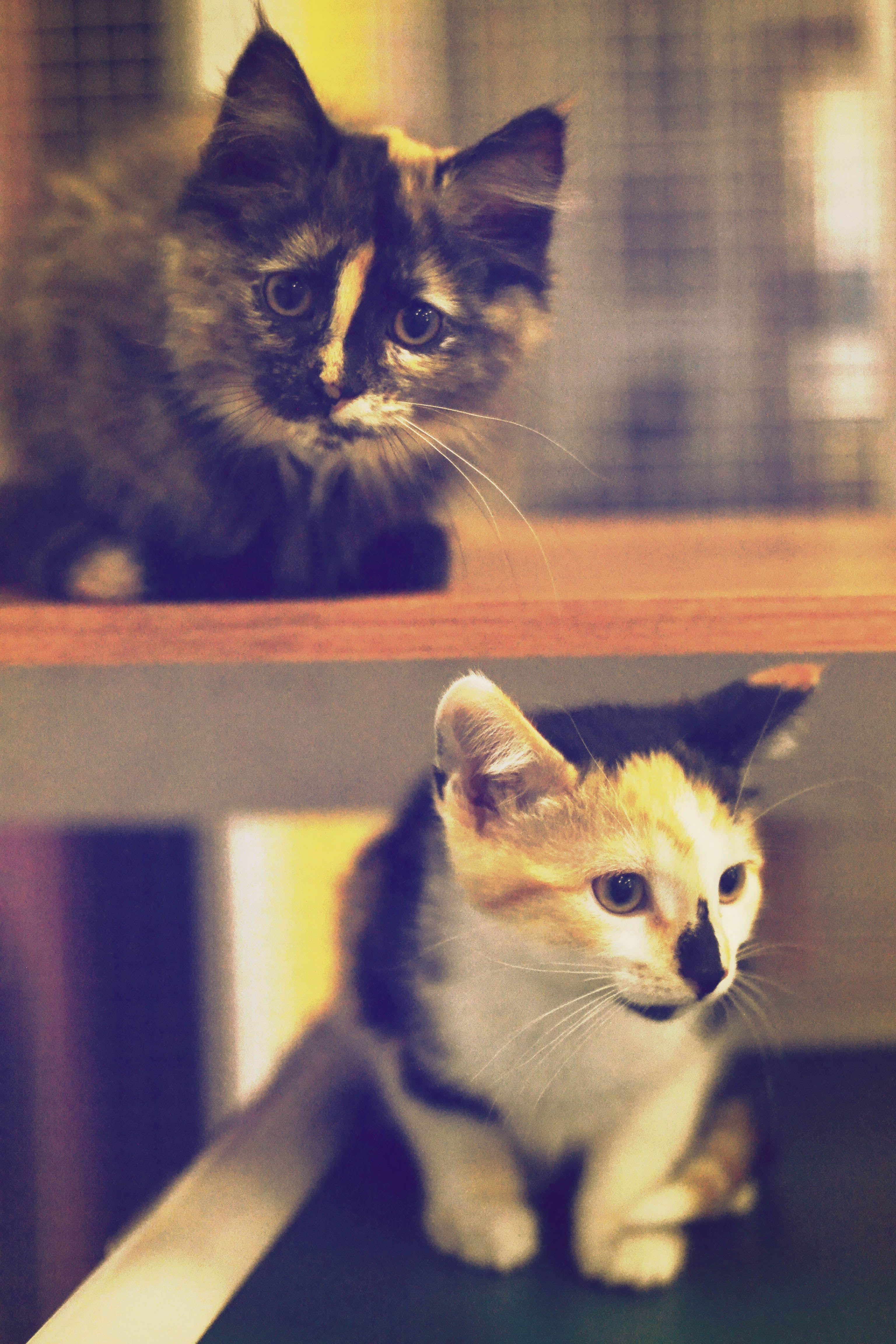 Kittens) Cute cats, Cute animals, Kittens