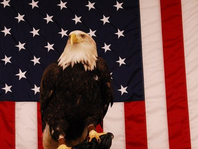 Angel, a bald eagle who lives at the National Eagle Center in Wabasha, MN, shows her patriotic side. Eagle Center is awesome!!
