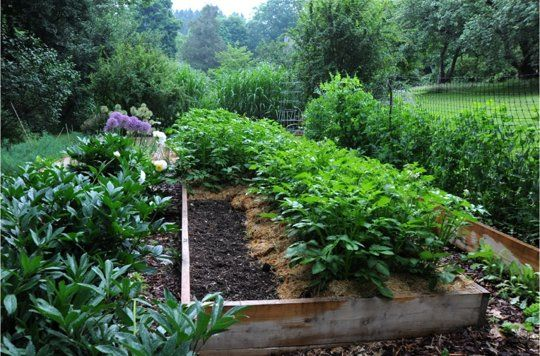 An Interview With Margaret Roach Of A Way To Garden