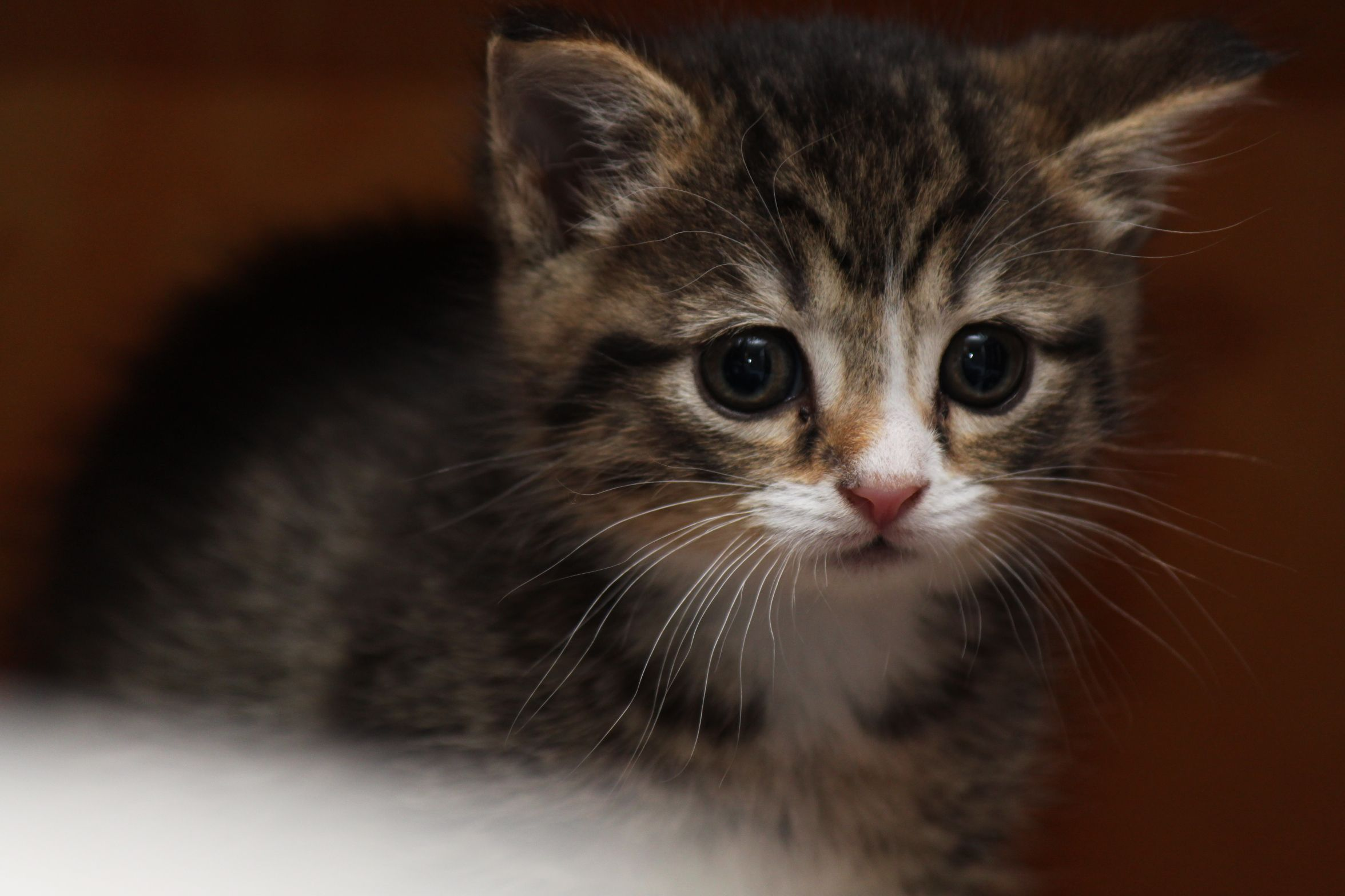 Such A Worried Little Face Guess You Have To Be On Guard If You Are The Runt Of The Little This Is One Of My Neighbor S Kittens Kittens Cats And Kittens