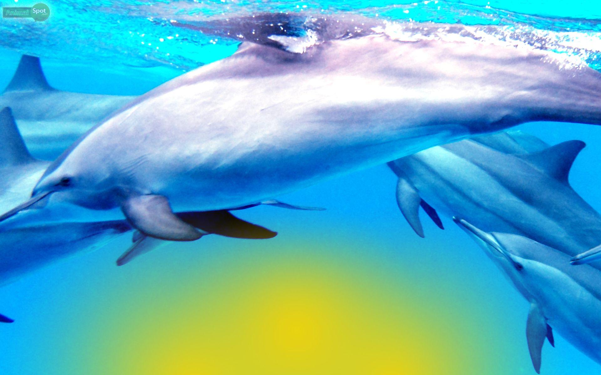 финальный дельфины картинки ассоциации шкатулка может
