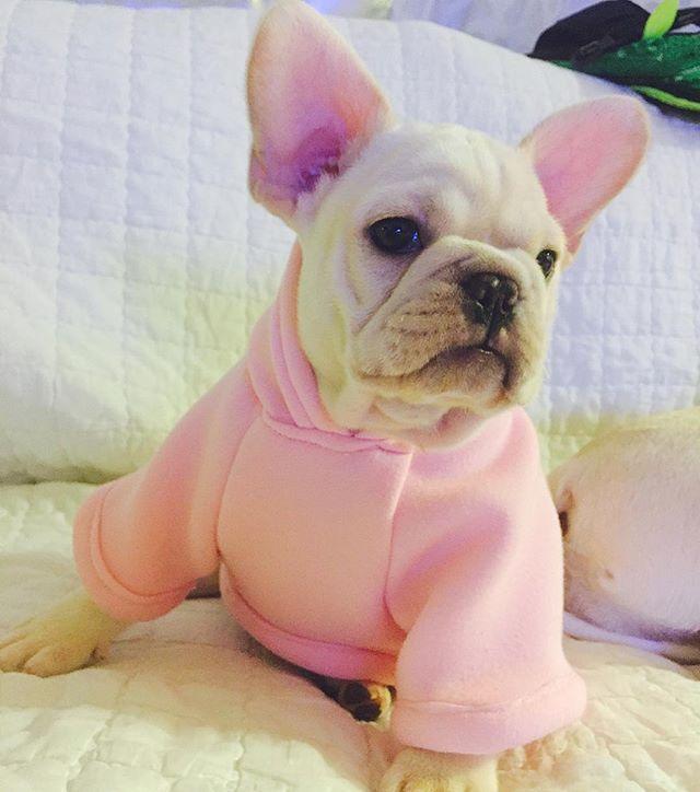 너무빨리만들어서 ㅋㅋㅋㅋ  미싱질이 삐뚤빼뚤...ㅋㅋㅋ @xxsjnxx 님네로 가게된 우리#핑쿠 에게 만들어준 핑크후드!! 어제갔는데 ㅜㅜ 다못만들어서 오늘빨리만든다고만들다 ㅜㅜ 망친거같아서 못드리겠어요 ㅜㅜ 그래도 지금너무애기라 옷사면 얼마못입히니 요걸루 대강 입히시다 버리시면될꺼같다는 ㅋㅋ 곧보내드릴게요~ 아아 ㅋㅋㅋ 핑쿠이름은 ㅋㅋㅋㅋㅋㅋㅋㅋ#덕배 가되었대용 ㅋㅋㅋ 네이버 에 #프렌치불독MBD  #frenchbulldog