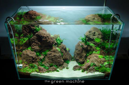 Elegant Altitude Nature Aquarium Aquascape By Aquascaper James Findley