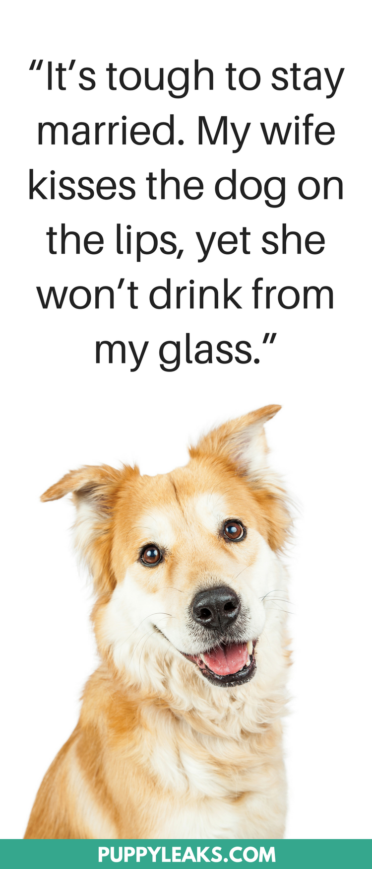 30 Cute & Funny Dog Quotes Dog quotes funny, Dog quotes