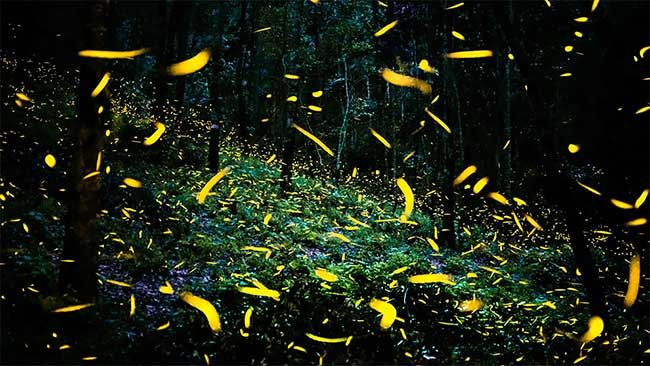 Millions of Fireflies Fluttering in Mexican Forest. Photo Sergio Robledo #fireflies #forest #mexico #photography #fairytale