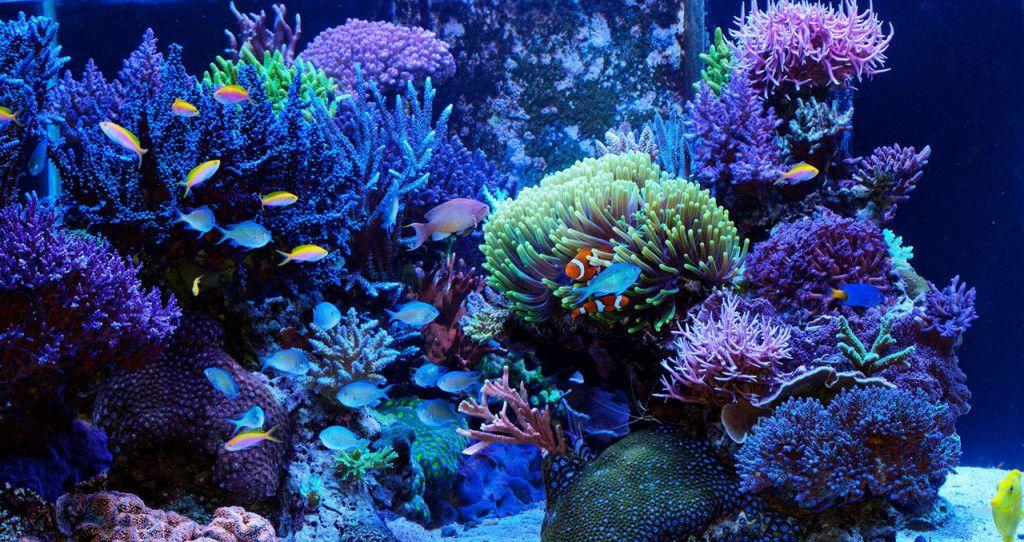 Aquarium Recifal Aquarium Eau De Mer Aquarium D Eau Salee Aquarium Marin