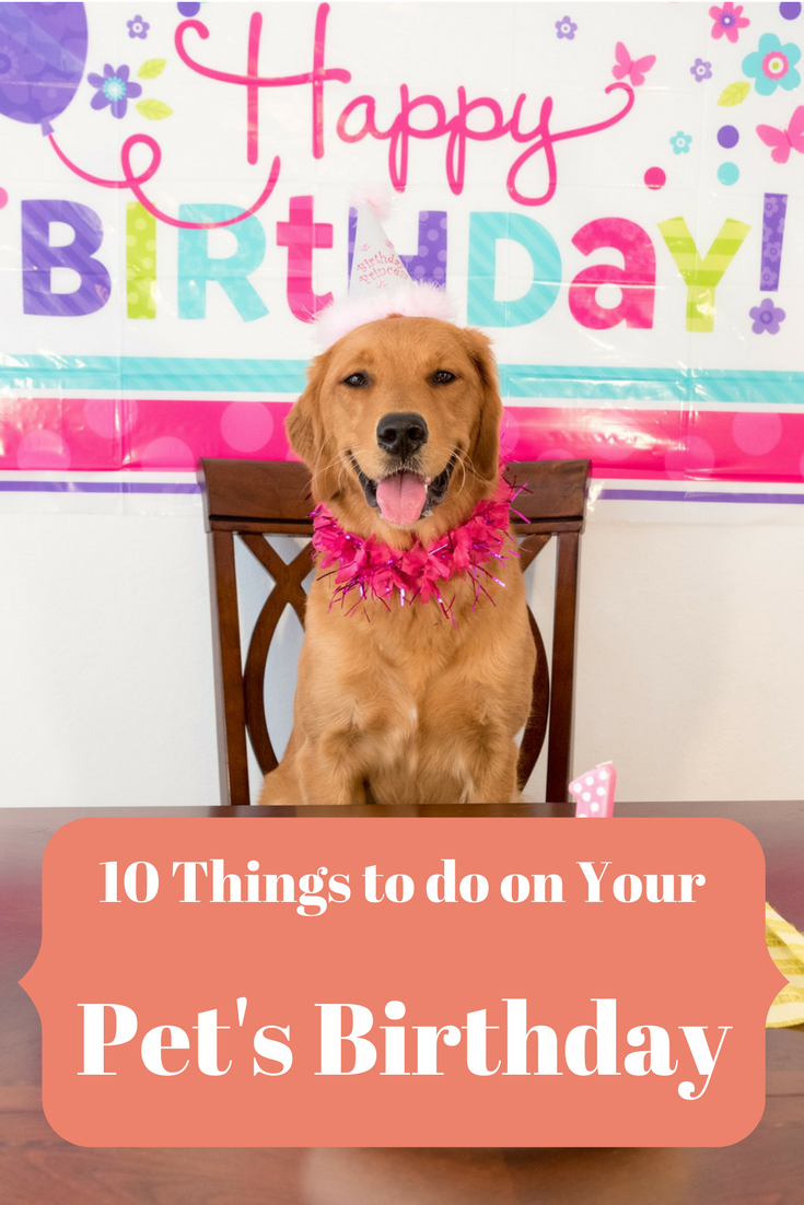 Pet Birthday Party Tips Celebrate Your Dog Cat Kitten Or Puppy S Special Day With These Fun Birthday Ideas Bake Dog Birthday Animal Birthday Puppy Birthday