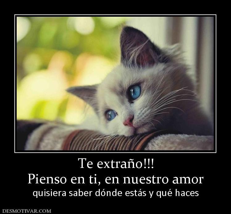 Te Extrano Amor Mensajes Etiquetas Amor Te Extrano Pienso En Ti En Nuestro Amor Quisiera Saber Cat Problems Cats World Cat