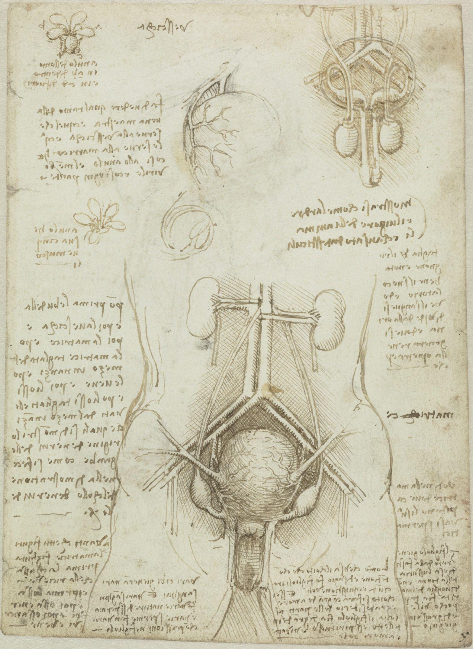 Leonardo da Vinci (1452–1519), Manuskriptblatt mit anatomischen ...