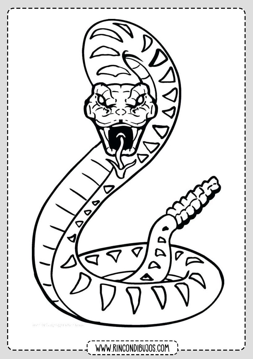 Serpiente Cascabel Para Colorear Rincon Dibujos Dibujo De Serpiente Paginas Para Colorear De Animales Arte De Serpiente