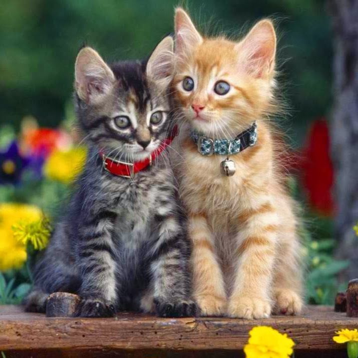Cat Couples That Ll Make You Say Aw Kittens Pets Kittens Cutest