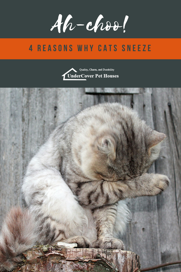 4 Reasons Why Cats Sneeze Cat Parenting Cat Sneezing Cats
