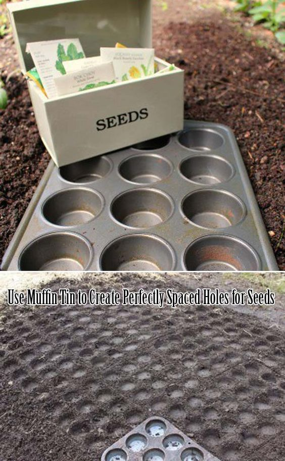 23 Insanely Clever Gardening Ideas on Low Budget -   16 planting to get ideas