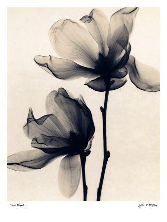 Photographies En Noir Et Blanc Reproduction Artistique Sur