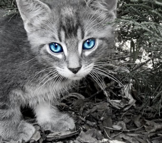 Pin By Seba Steed On Trace Of Color Warrior Cats Warrior Cat Names Warrior Cat