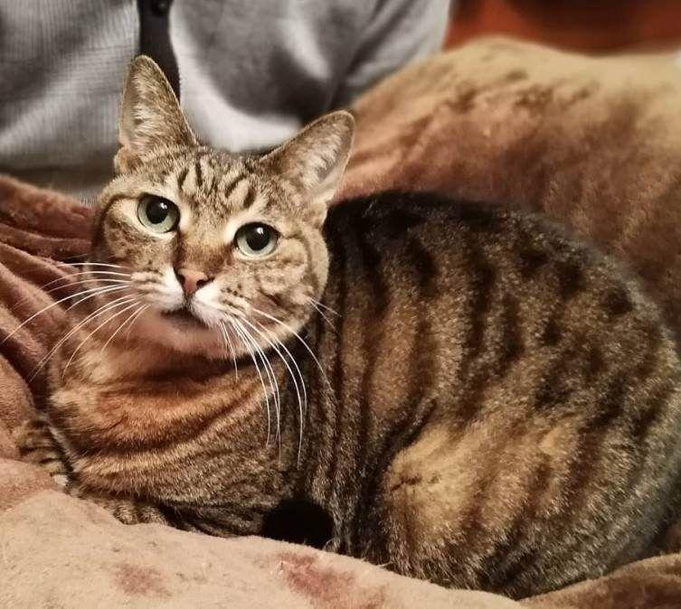25 Brown Tabby Cat Names Tabby Cat Names Tabby Cat Cat Names
