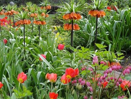 paisaje tradicional por B Diseño de jardines plantas bellas