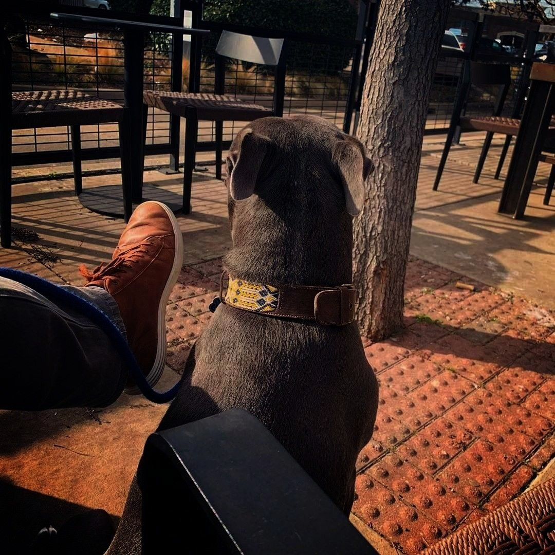 time at starbucks offleashstudio Byron does not understand she doesnt like playing this way Wait until the end  via rph  Follow bullymake for more adorable dogs  Im a sim...