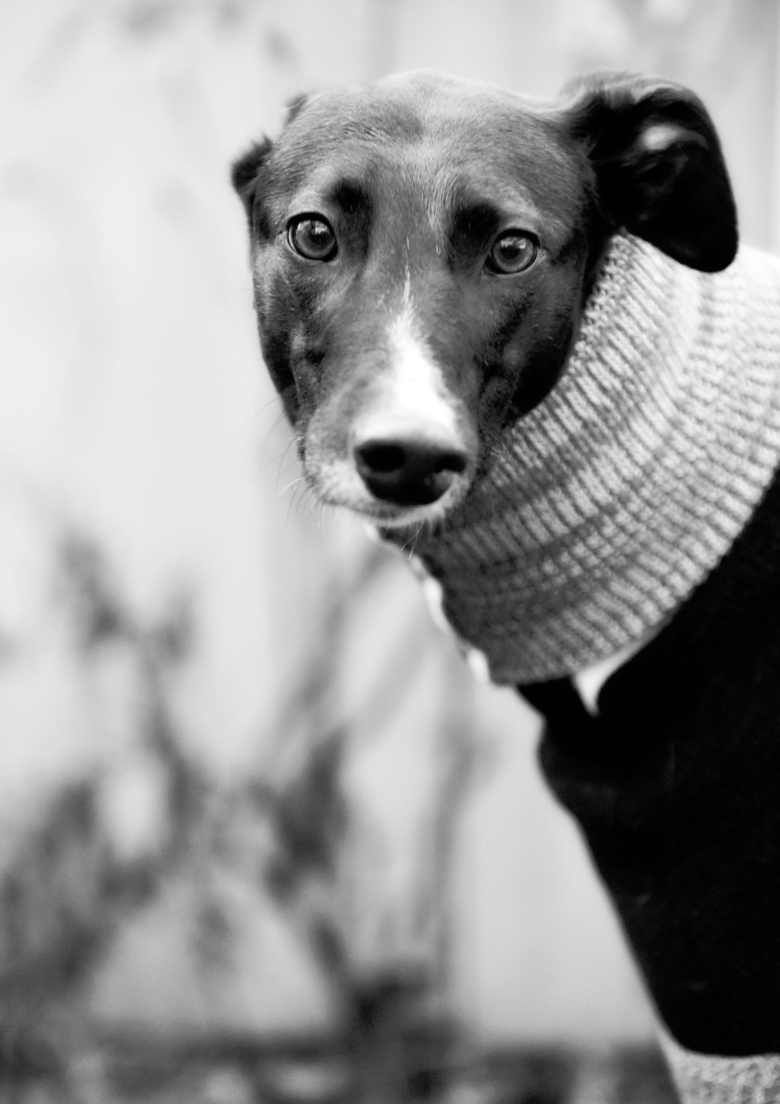 Posts About Wimbledon Greyhound Welfare On Madaboutgreys Dog