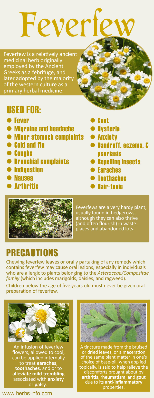 Uses And Benefits Of Feverfew Feverfew Herbalism Herbs For Headaches