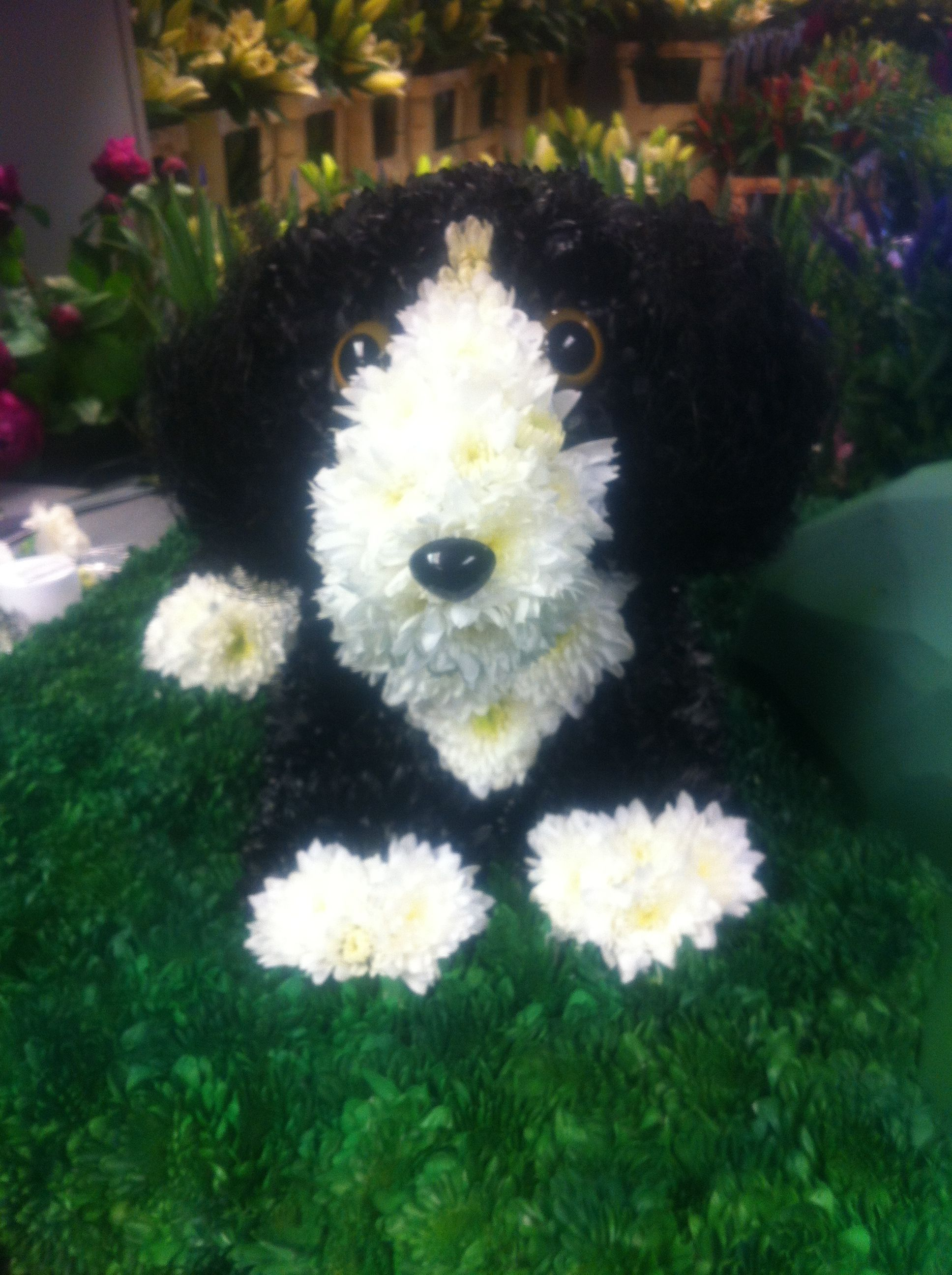 Sheepdog tribute for a funeral created in house at amie bone flowers sheepdog tribute for a funeral created in house at amie bone flowers izmirmasajfo