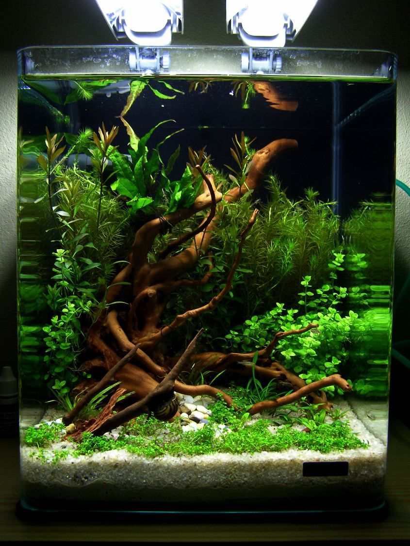 Nano Cube 20l I35996 Jpg 845 1 126 Pixel Aquarium Aquascape Betta Aquarium Nano Cube