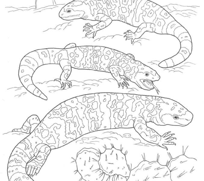 printable pictures of desert animals and plants printable coloring pages of desert plants free image pictures