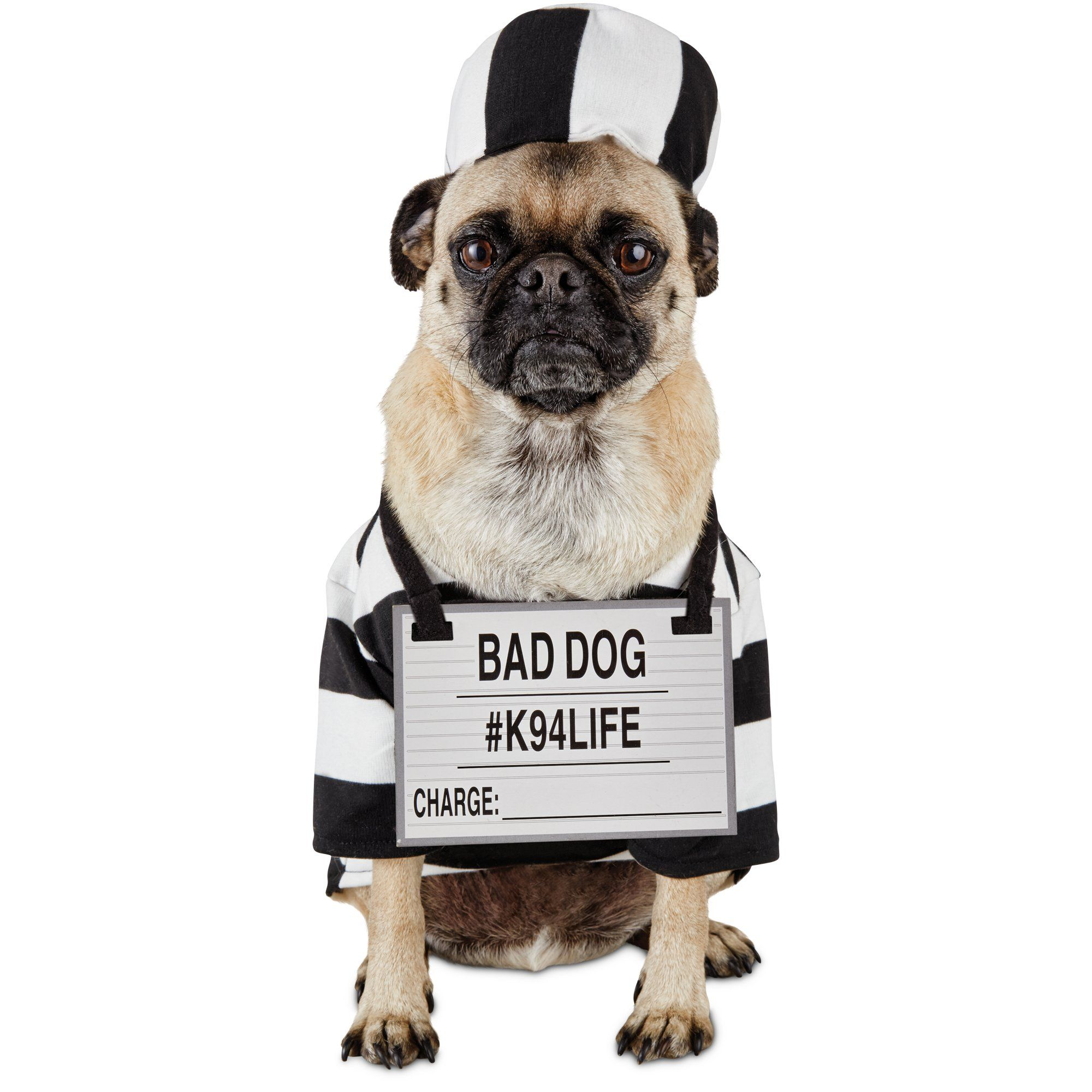 Halloween+Bootique+Pug-shot+Prison+Dog+Costume+-+Find+your ...