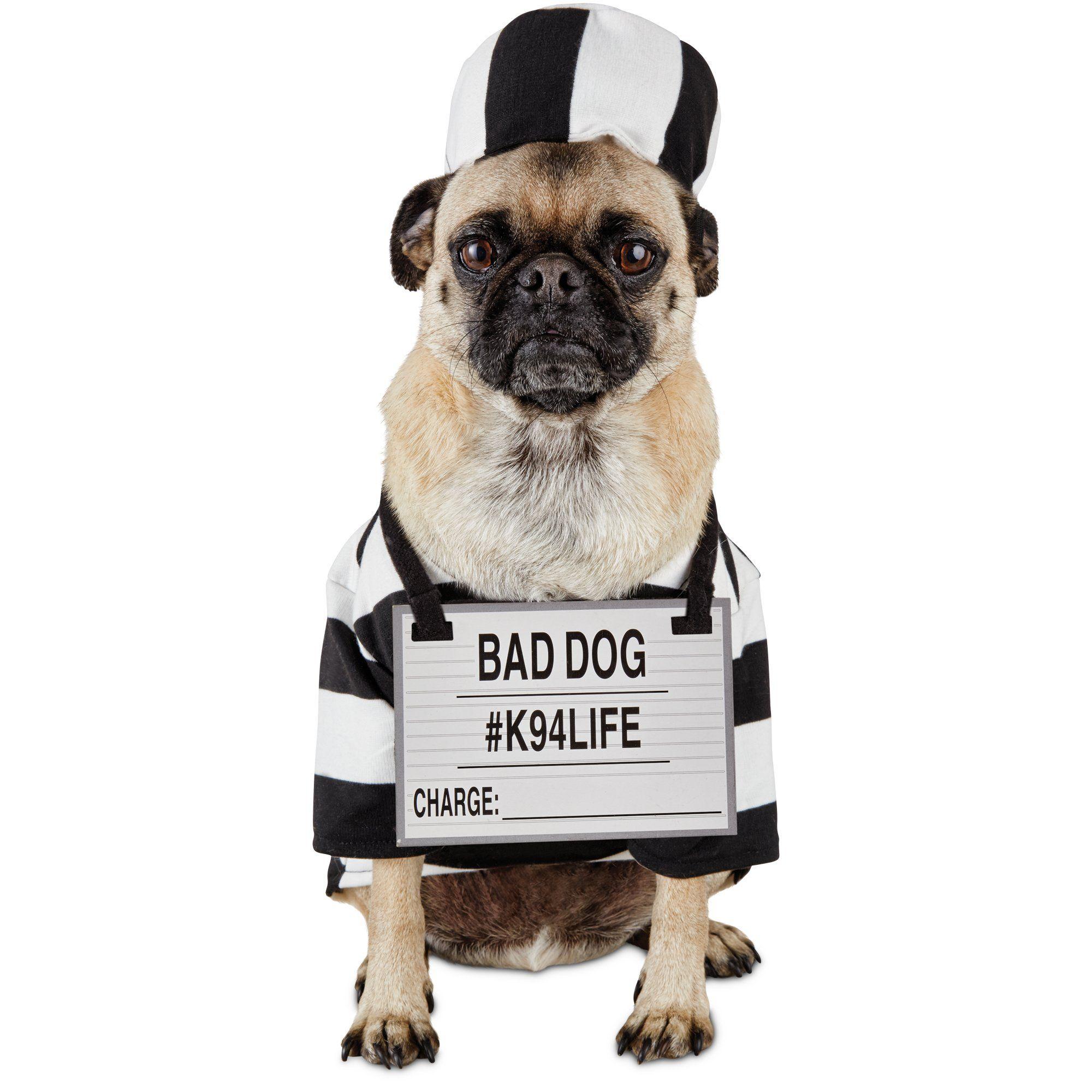 Halloween+Bootique+Pug
