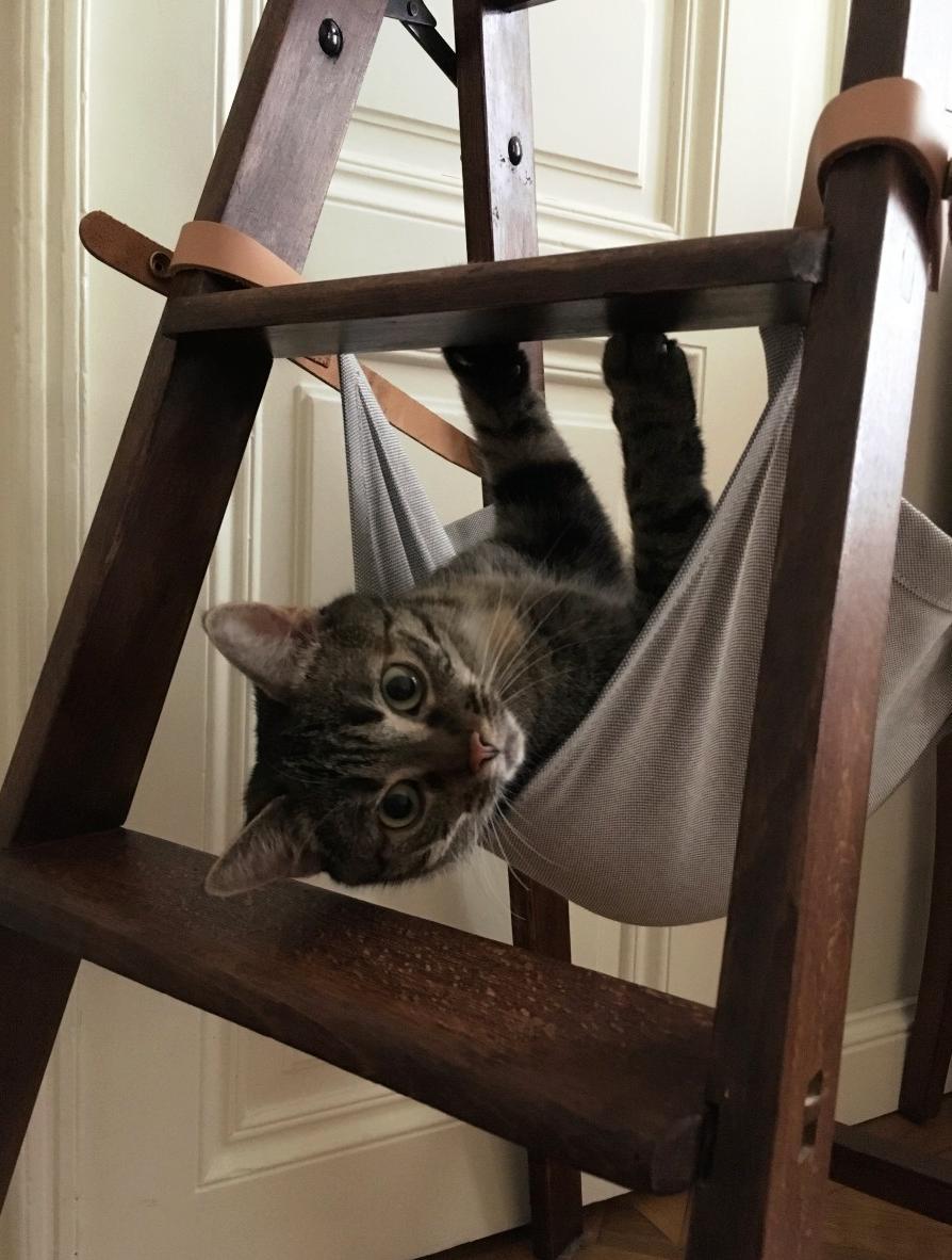 Katzen Hängematte selbst basteln   Frag Mutti   Katzen hängematte ...