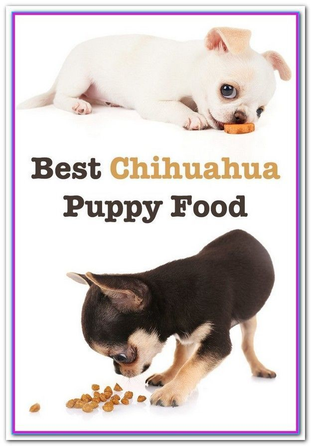 Best Wet Dog Food For Chihuahua Puppy Best Dog Food For