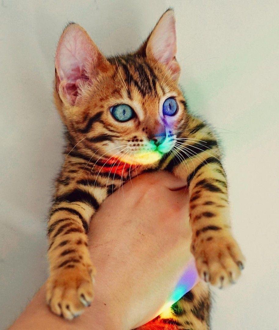 Sukiicat Baby Animals Cute Cats And Kittens Cute Cats