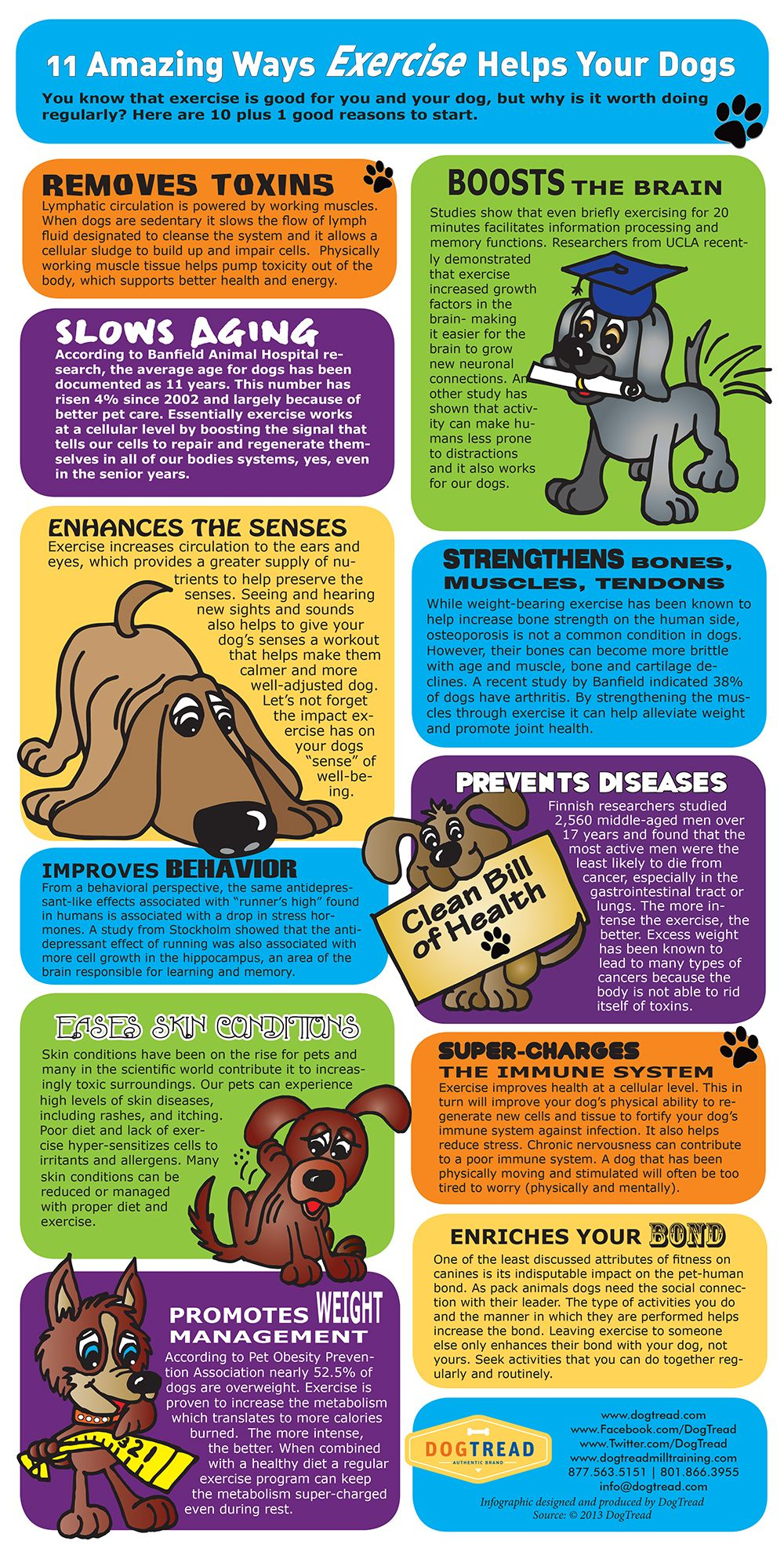 Infographic 11 Ways Exercise Helps Your Dogs Dog Exercise Dog Infographic Healthy Pets