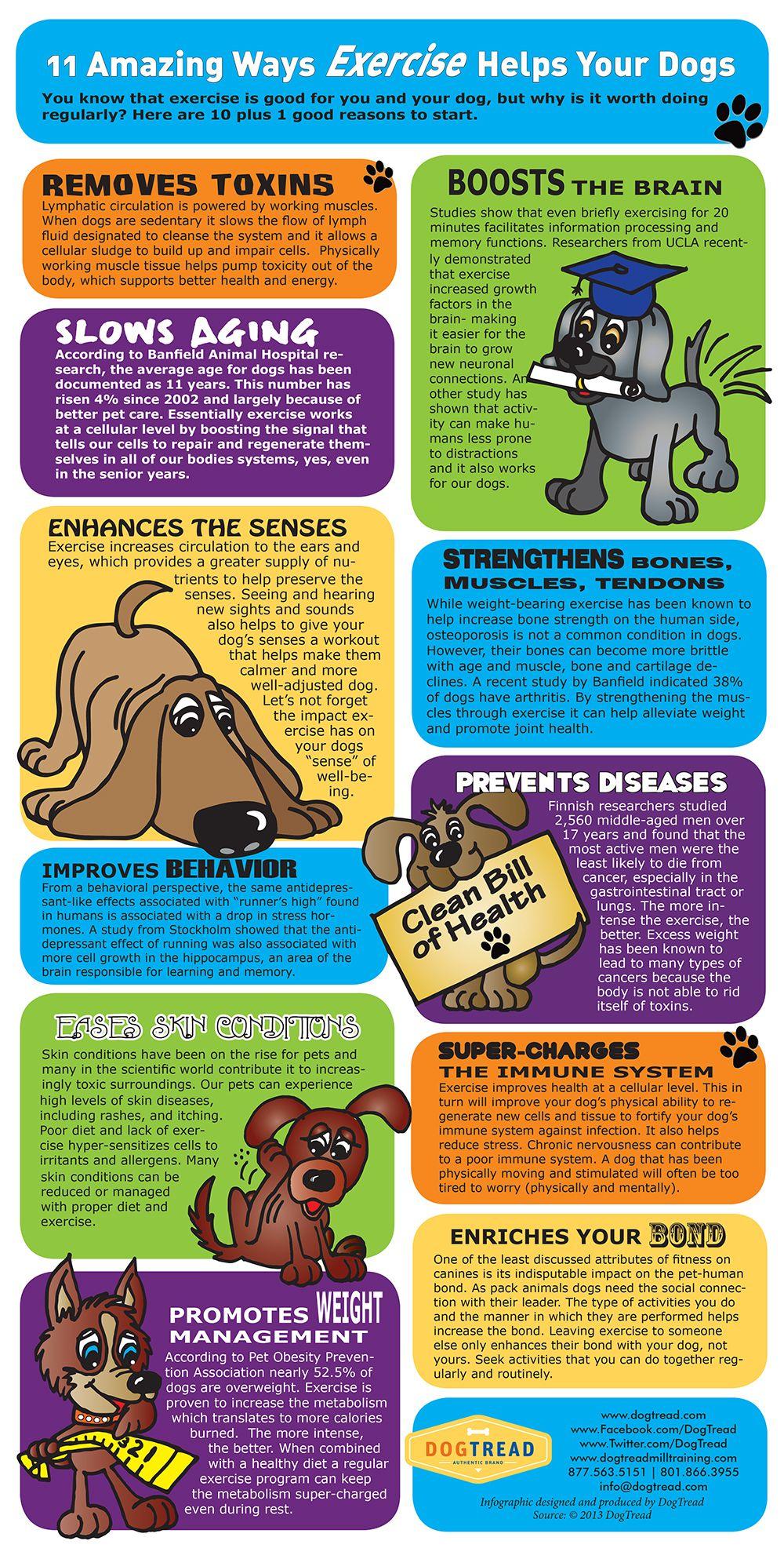 11 Amazing ways Exercise Helps Your Dog DogExercise