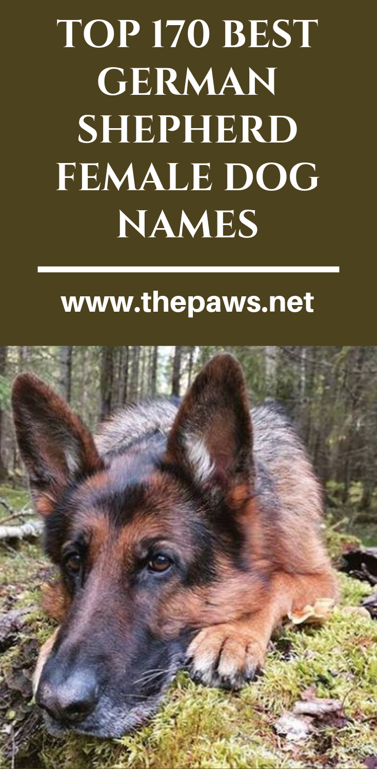 Top 170 Best German Shepherd Female Dog Names With Images