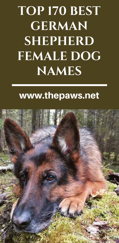 Top 170 Best German Shepherd Female Dog Names In 2020 Dog Names