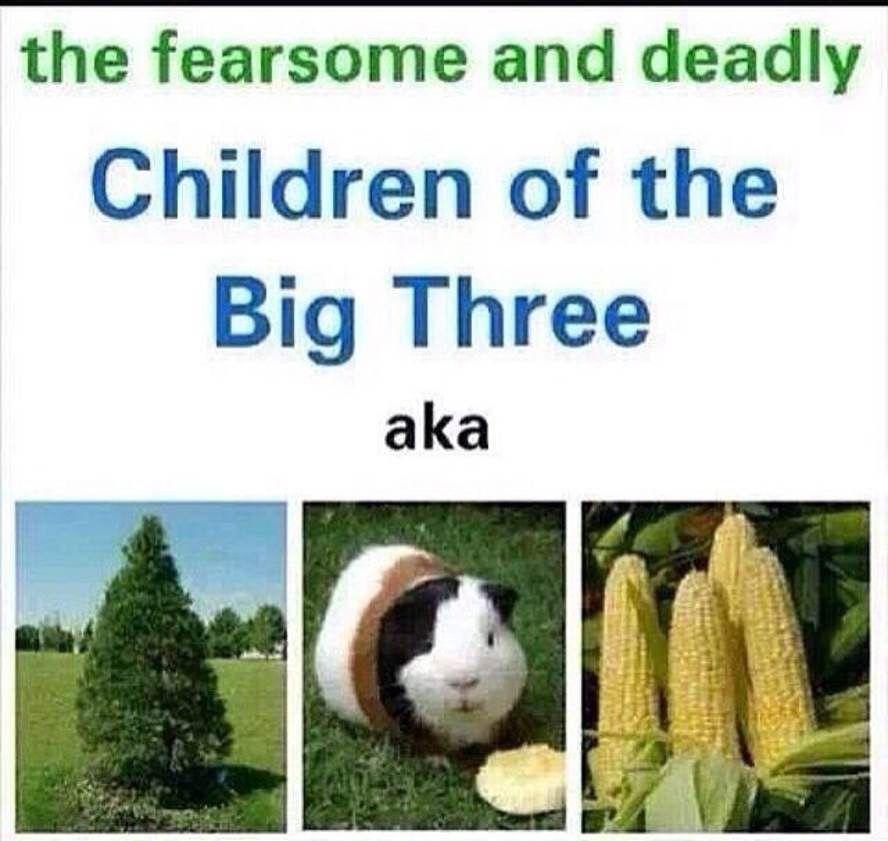 Thalia Percy And Hmm Yes Corn Percy Jackson E Os