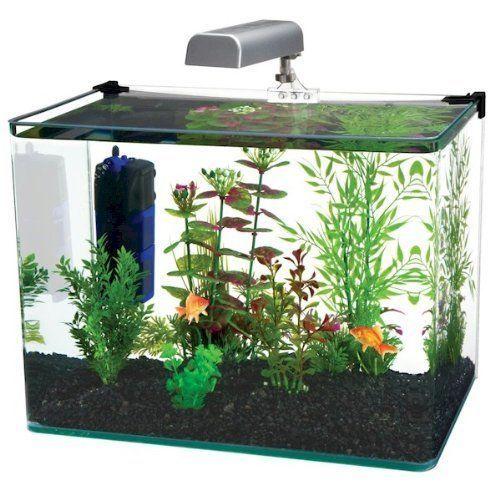 Penn Plax Curved Corner Glass Aquarium Kit 10 Gallon On Ebid United States 144877941 Aquarium Kit 5 Gallon Aquarium Glass Aquarium