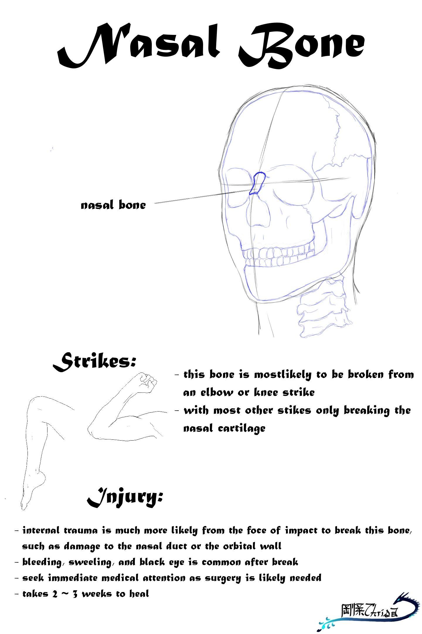 Nasal Bone Anatomy Strikes And Injury Karat Pinterest