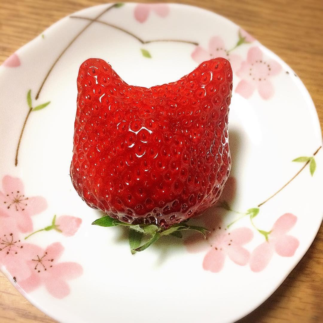 猫いちご?☆*:.。. o(≧▽≦)o