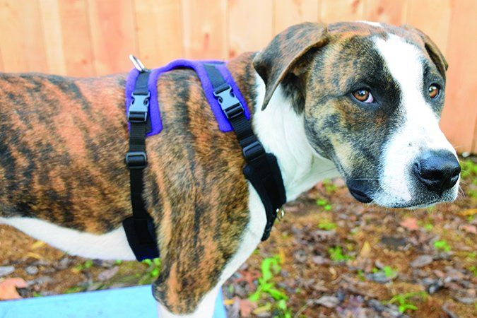 The Best Front Clip Dog Harnesses Dog Harness Dogs Dog Comparison