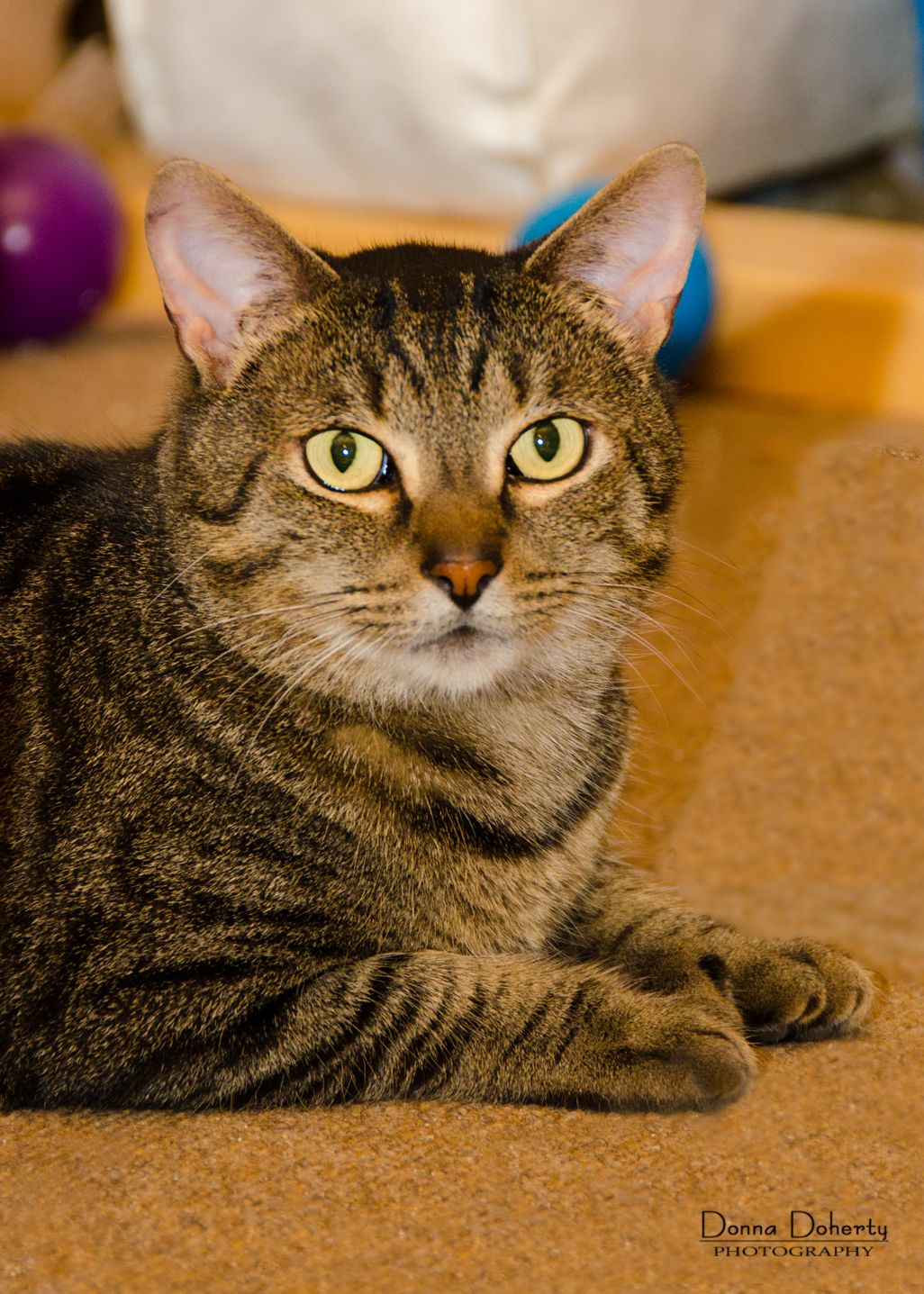 Ashes is a super sweet and affectionate 3 year old