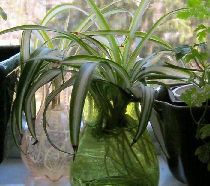 8 Best Indoor plant grow in water -   16 plants Growing in water ideas