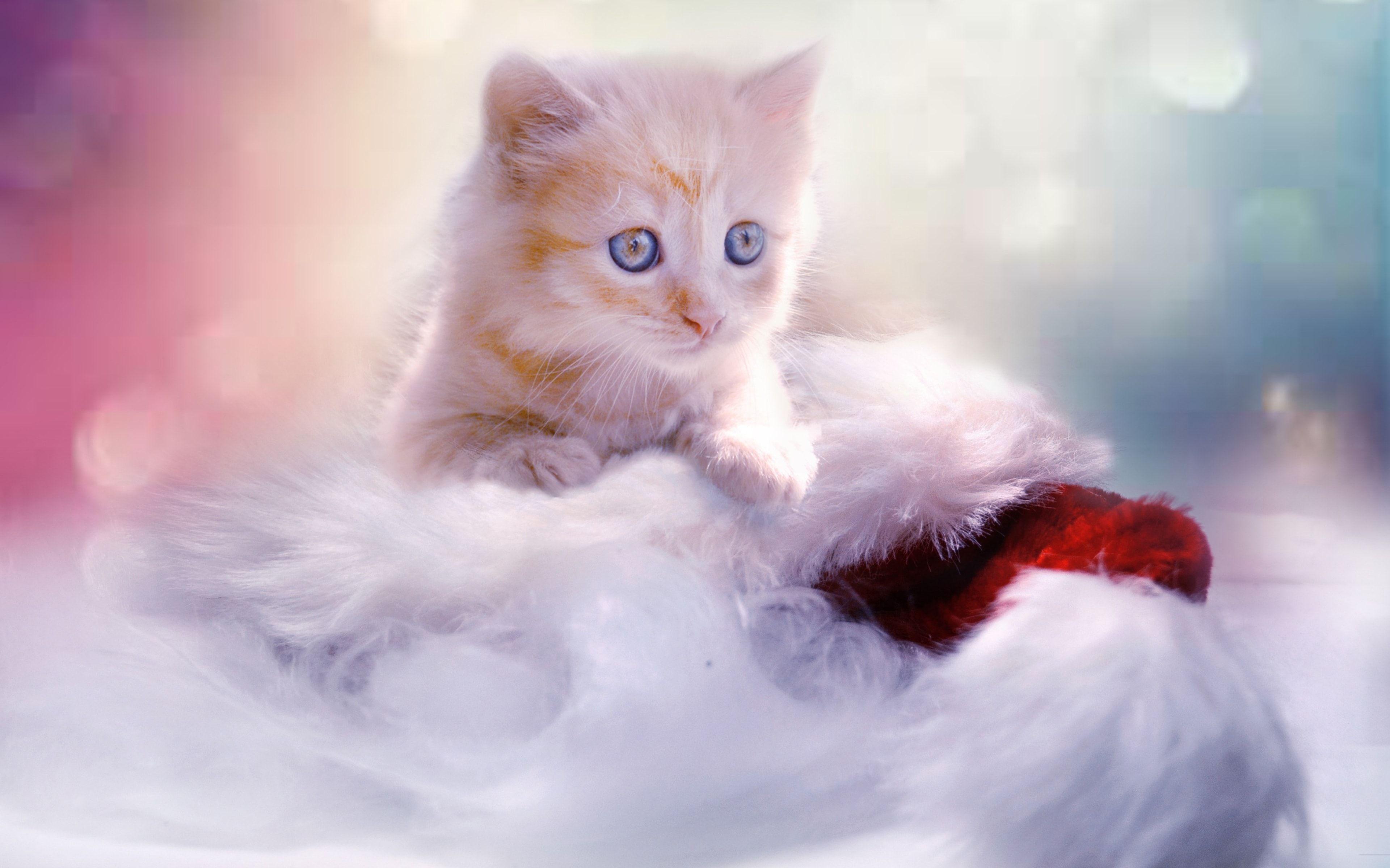 White Christmas Cute Kitten 4k Christmas Cats Kittens Cutest