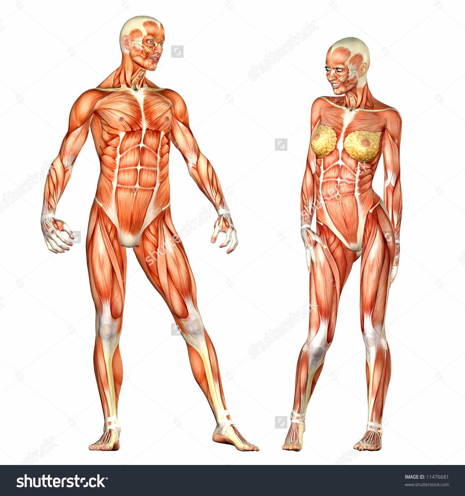 Risultati Immagini Per Woman Anatomy Corpo Anatomia Pinterest